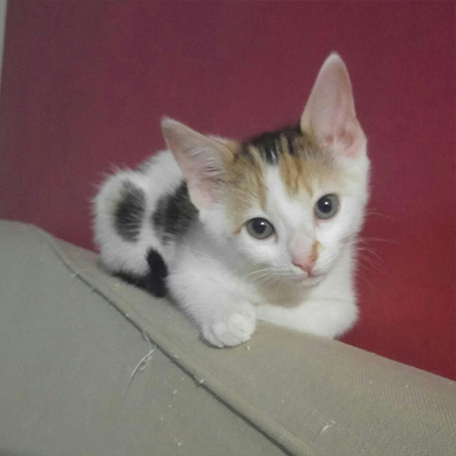 Kittens-cape-town22