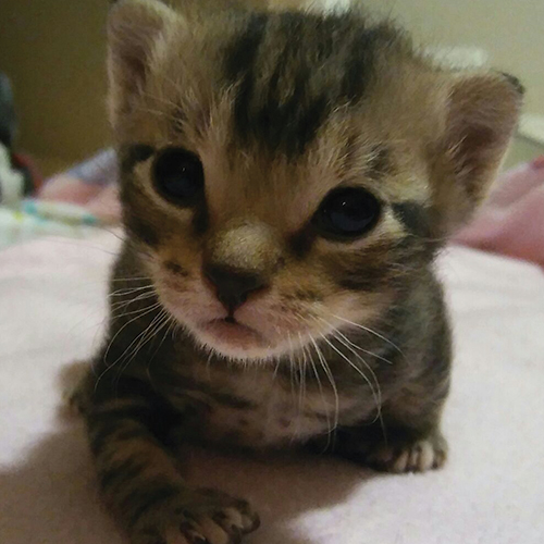kittens-cape-town-3